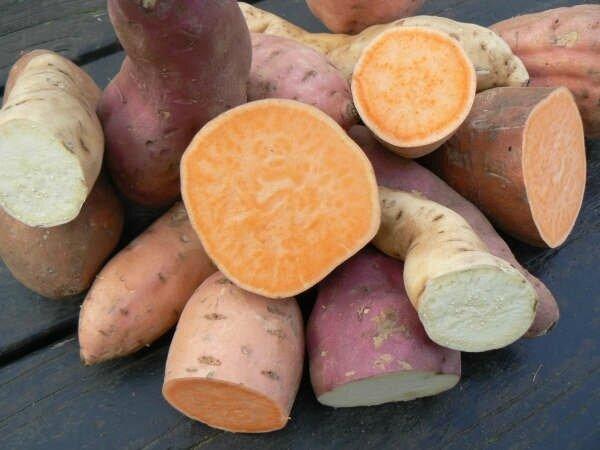 patates douces variées
