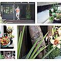 Terrasses & plantes vertes ...