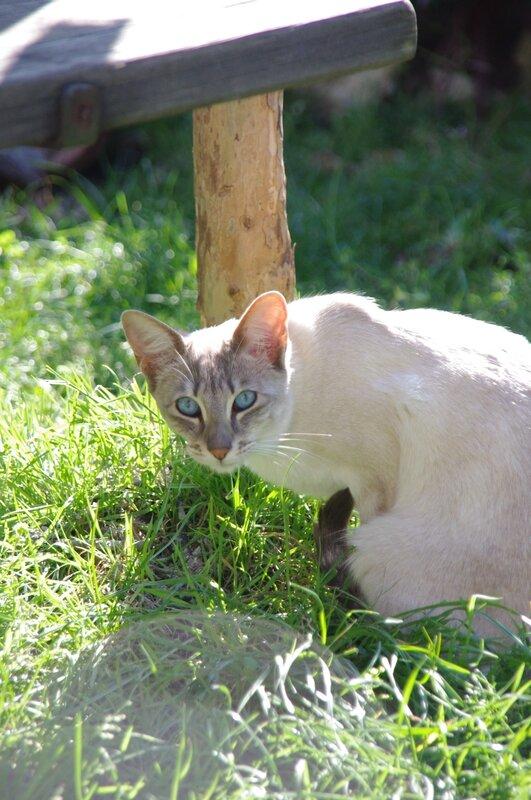 opale au jardin