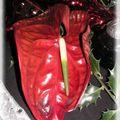 noël rouge noir 007_modifié-1