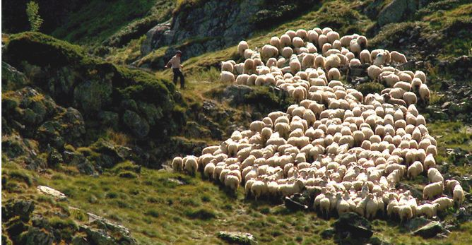 Transhumance