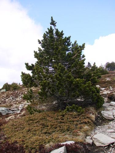 2008 04 24 Le nature sur le Mont Mézenc