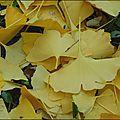 2011_11_15-POM-P1060307