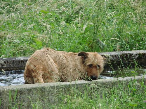 2008 07 05 Cacahuète dans le bassin