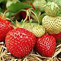a propos de fraisrs