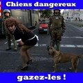 chiens dangereux1