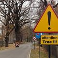 attention_arbre