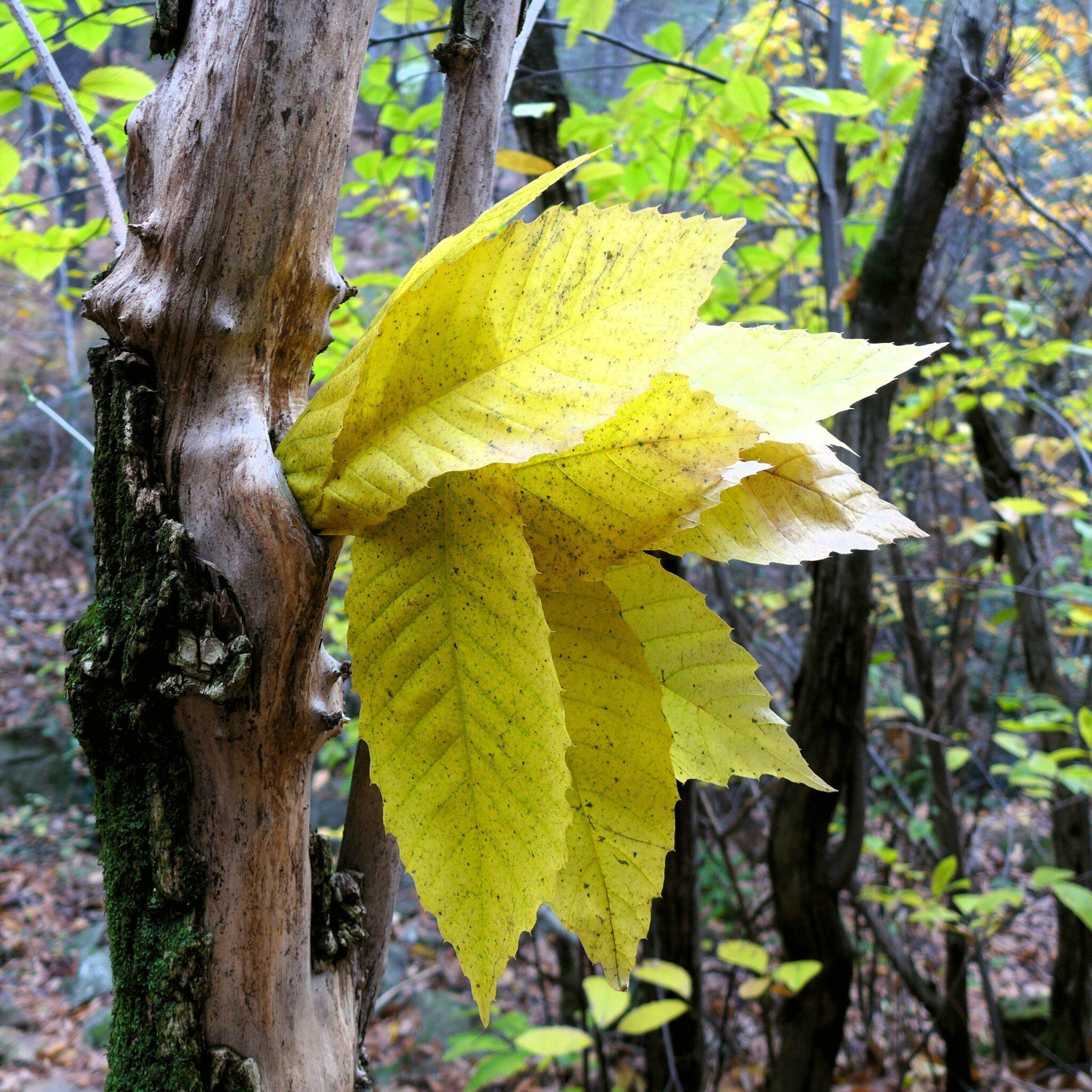 j'aime le bois j'aime les feuilles