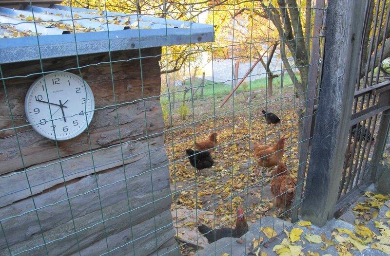 2- Poulailler - horloge