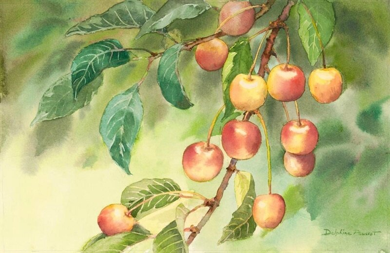 delphine poussot - SweetCherries