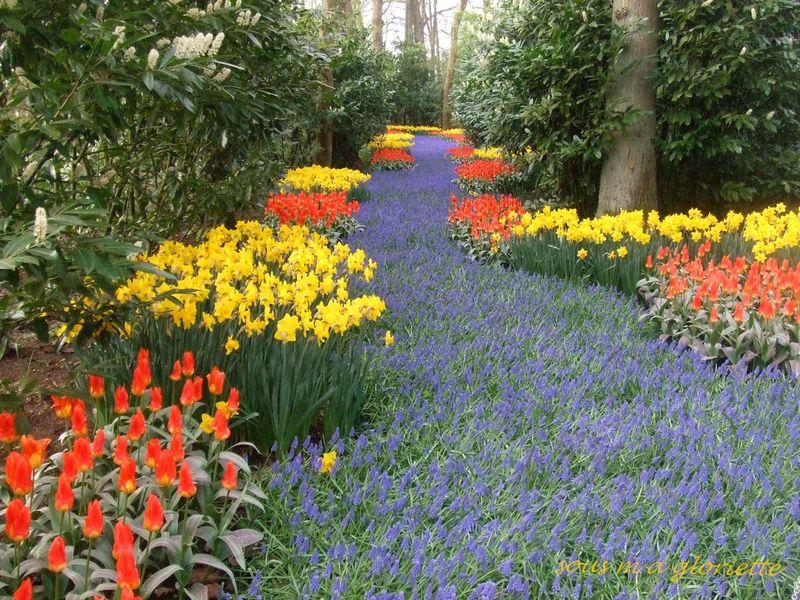 Le parc du keukenhof sous ma gloriette for Le jardin keukenhof