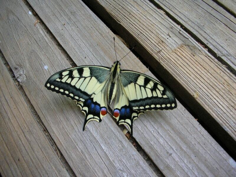 papillons_002