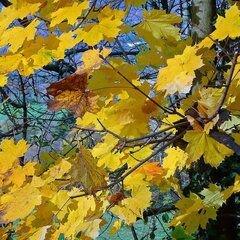 feuilles-en-automne-dd7db1fd-8168-4568-ad0a-622b3d7eae4b