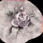 rose-rosee-efface
