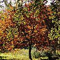 Feuillages automne 07121530