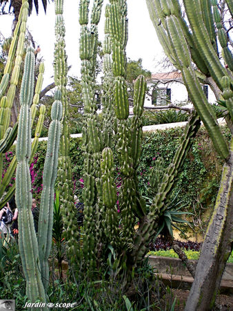 8727_cactaceae