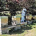 La production de miel...