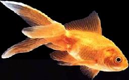 tube poissons 1
