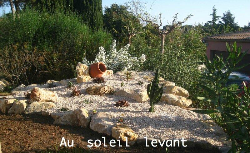 jardin cactés