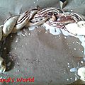 Brioche torsadée à la pâte à tartiner