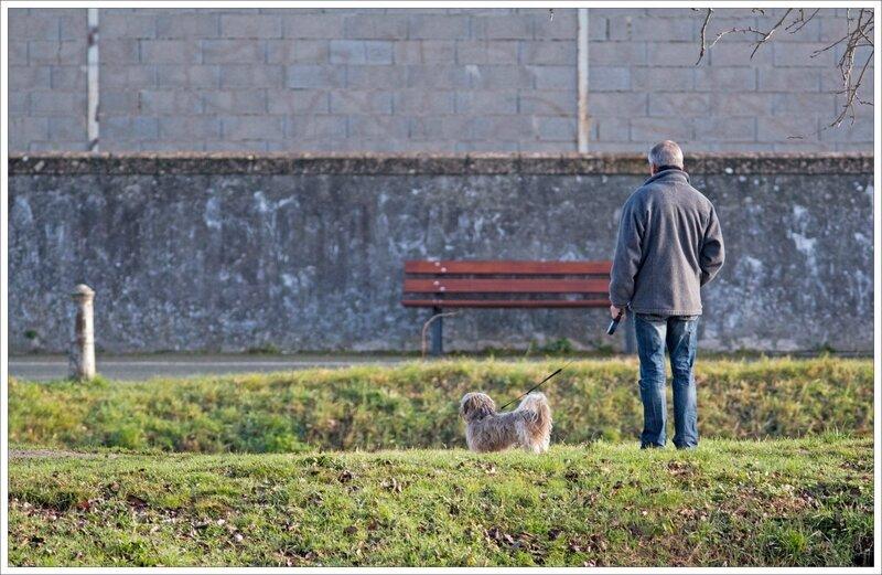 ville homme chien contemplation mur 060217