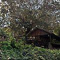 Réunion : Le Maïdo