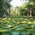 Le jardin botanique de pamplemousses