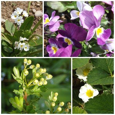 Fleurs mai 2013 (11)