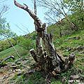 Défi 52- 2017: arbre