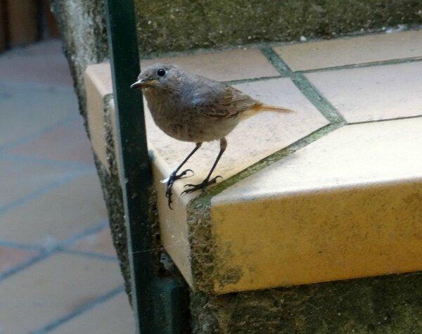 Mère oiseau