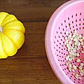 Récolter ses semences