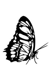 papillon_n_9_ag9ev_media