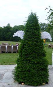 arbre_ange