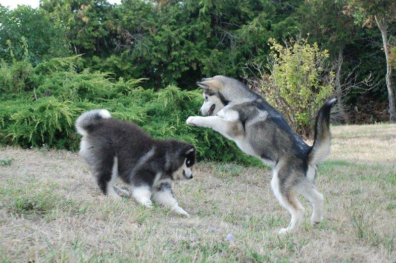Lyli et Laïka août 2015_110