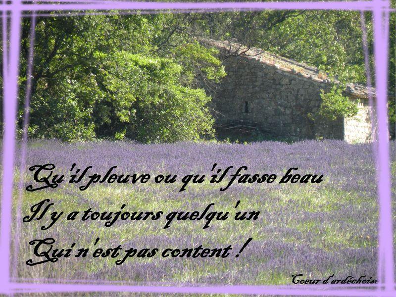Cabane_et_lavande