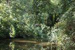 un arbre en travers du canal