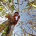 La guerre des graines - les graines sont-elles une marchandise ou un bien commun de l'humanité ???