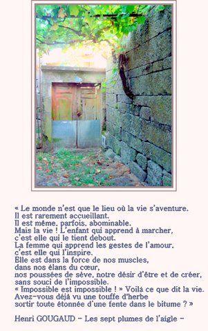 vigne_dans_le_mur_2
