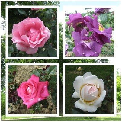 rosesGr2