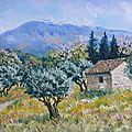 cabanon, oliviers et mont Ventoux
