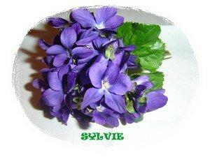 Sylvie_violettes