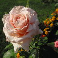 seconde rose 2010