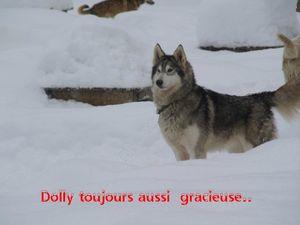 dollyblog