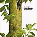 Takayama & Sagara 1985 page_12