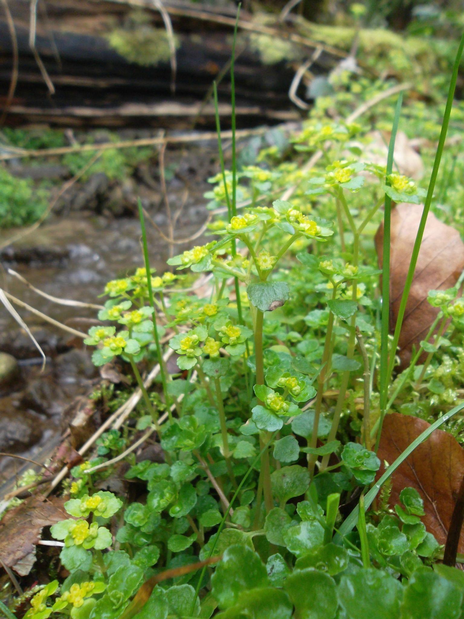 Plantes sauvages tous les messages sur plantes sauvages for Tous les plantes