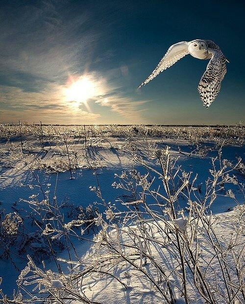 hiver chouette