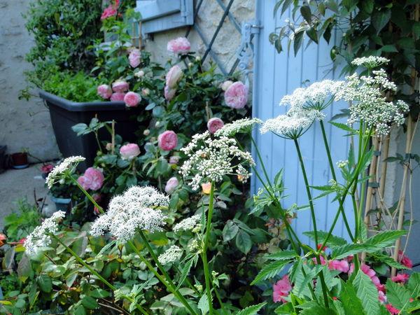 cour_juin_2013_fleurs_et_plantes_boisemont
