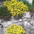 fleurs de rocailles