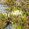 10-08-08 Grotfjord (29)