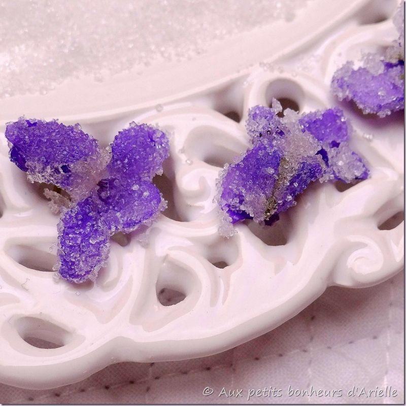 Violettes (16)